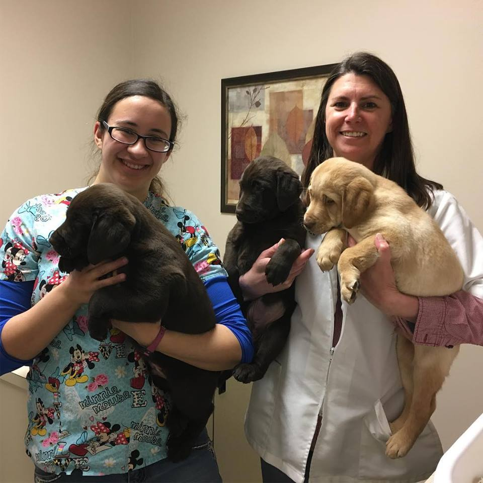 doctor and staff with puppies